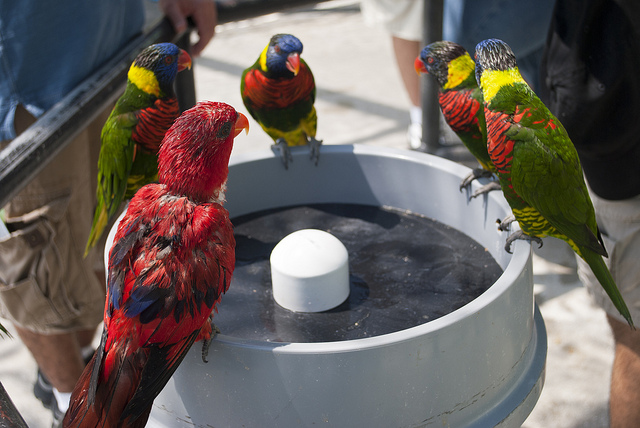 At The Water Cooler of Learning